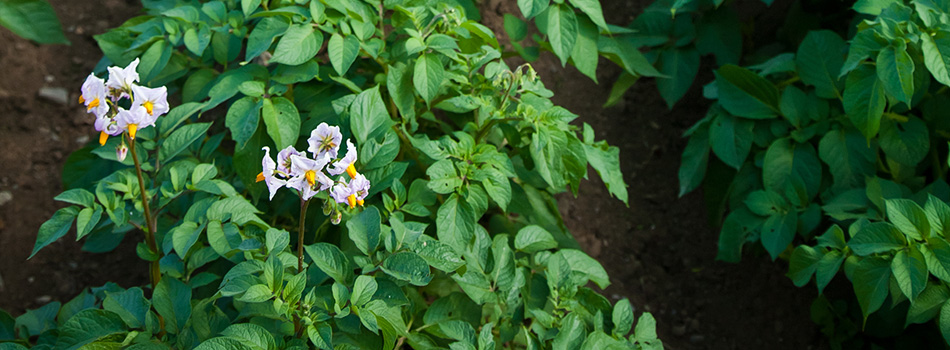latis-florazym-fleur