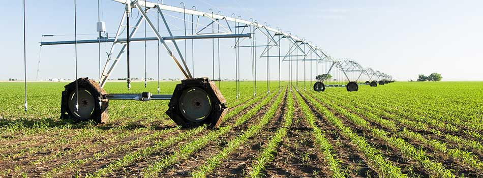 latis-irrigation-champs