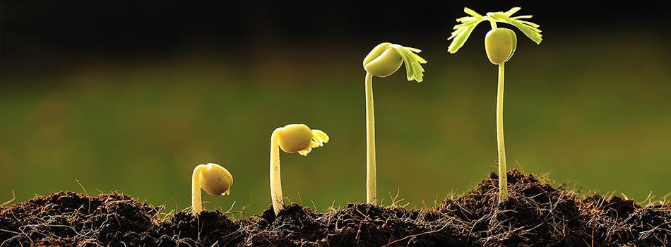 latis-plantules